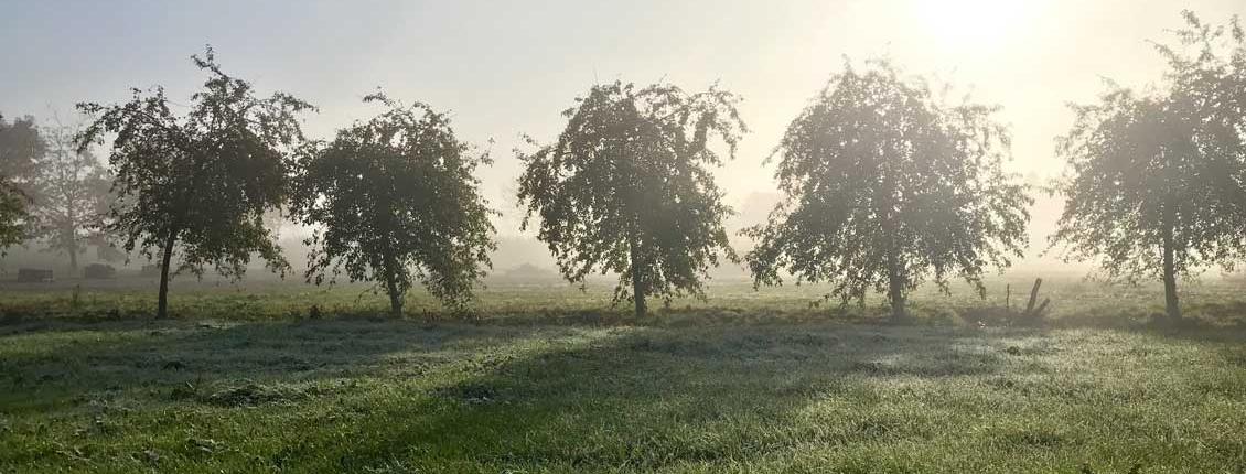 Hofmosterei Baumreihe Morgensonne
