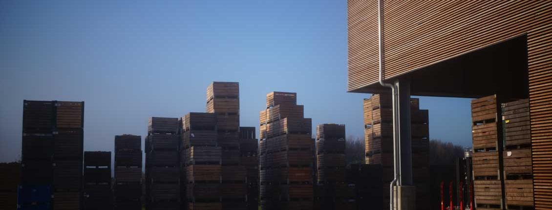 Hofmosterei Kistenstapel Morgenlicht